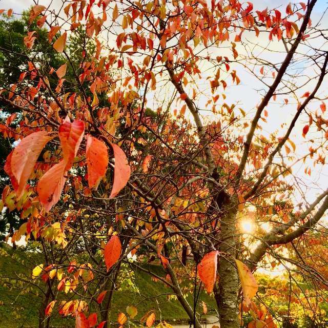 赤朽葉と斜陽