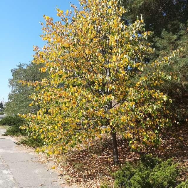 Осень дерево тепло свобода