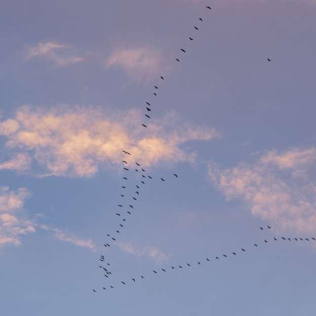 Crane wedge