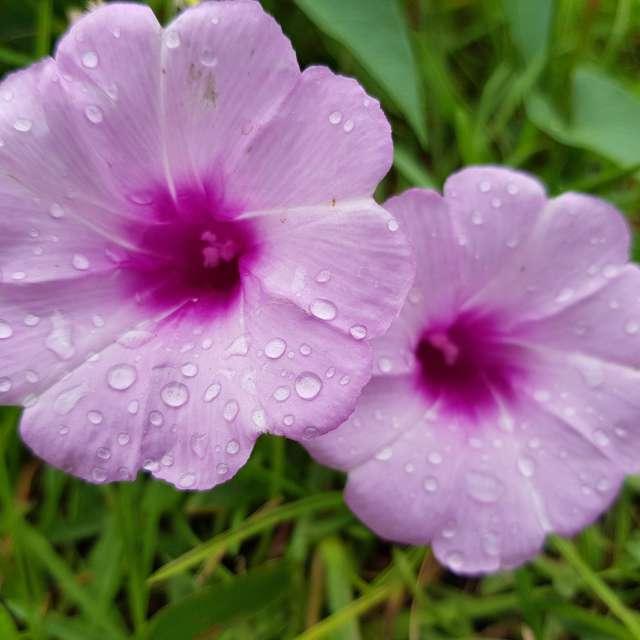Flores do litoral