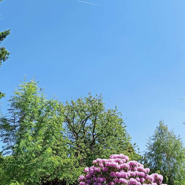 Blue sky and Rhododendron