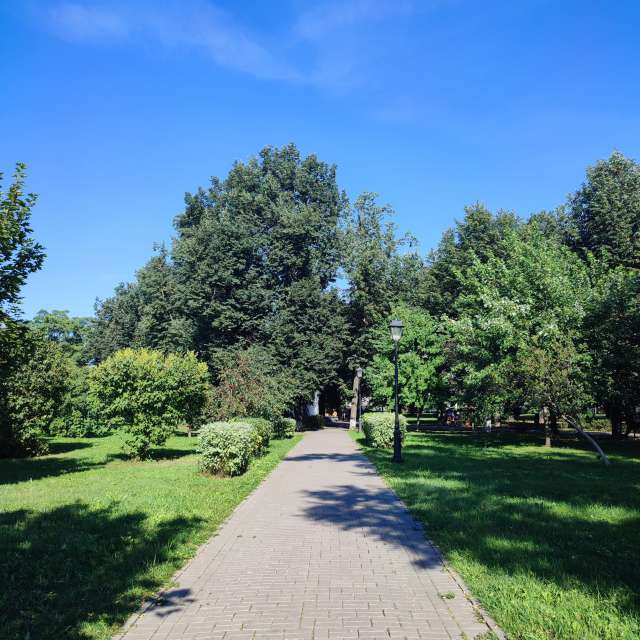 Beautiful green park in summer