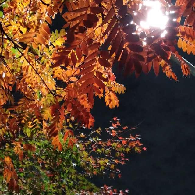 Frío otoño