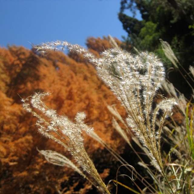 穏やかな秋の日和