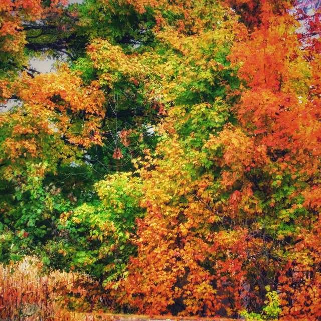 Autumn Trees in Backyard
