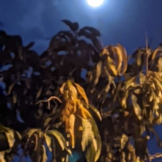 Moonlight in the night