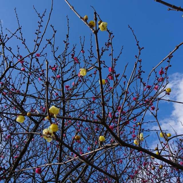 青空と初春の香り