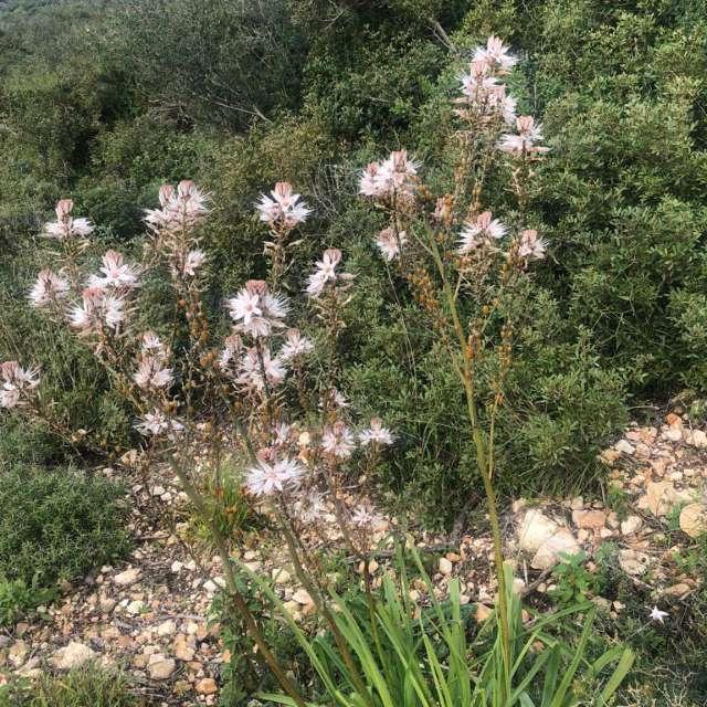 полевые цветы распустились