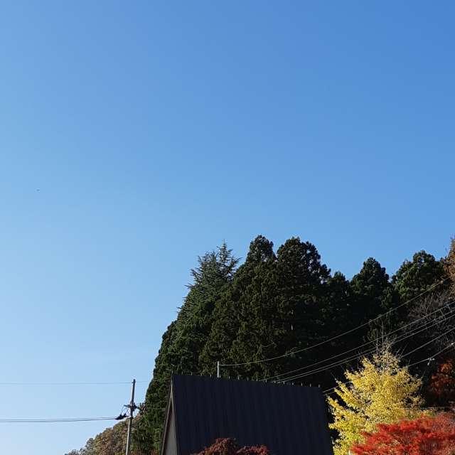 快晴 紅葉がきれい