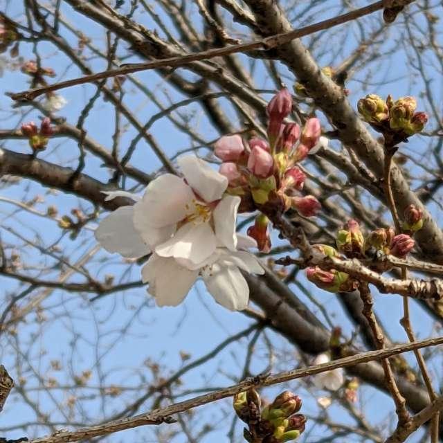 暖かい春の日