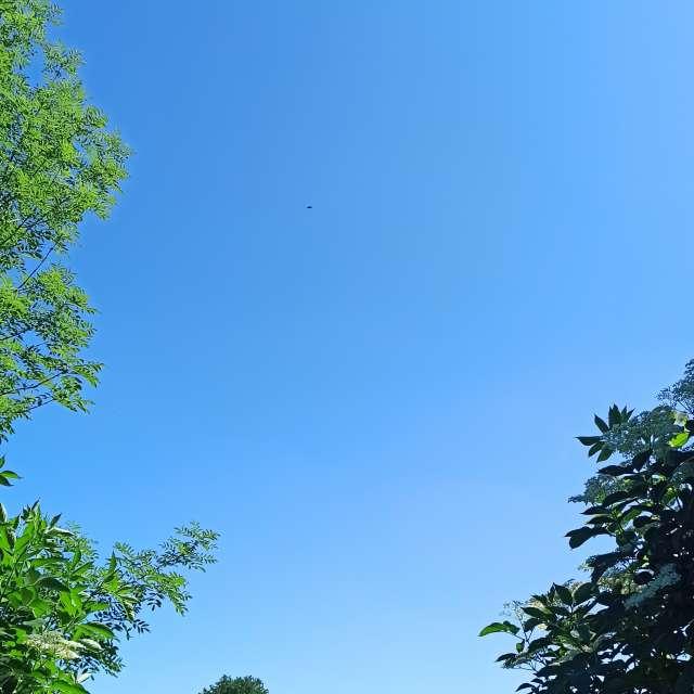Clear skies and elderberries