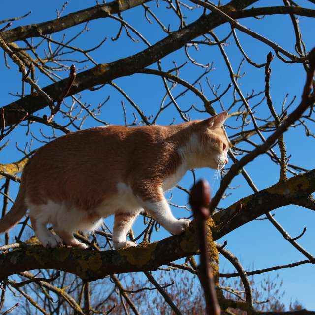 Cat in a tree with sky in back