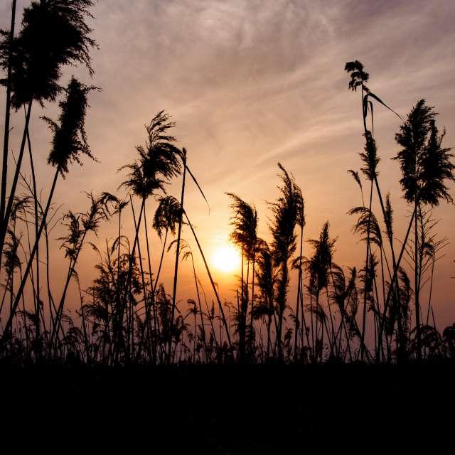 Photos Le coucher du soleil. Prévisions météo avec de superbes photos de Eazo de Monde