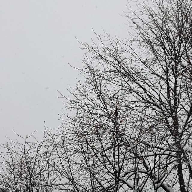 Heavy snow morning