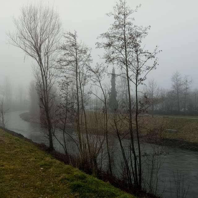 Im Nebel/In the Fog