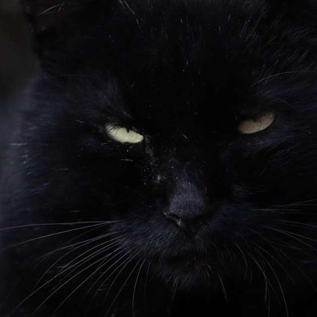 黒猫の視線