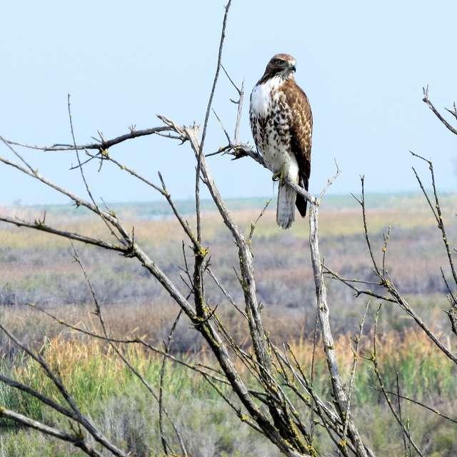 Hawk Landscape