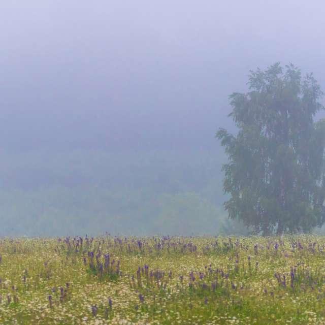 Foggy Morning in Latvia