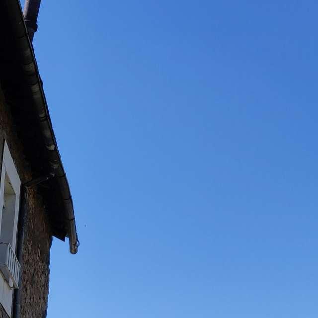 Golondrina trae comida al nido