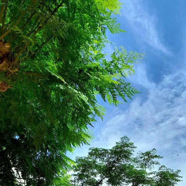 sunny noon