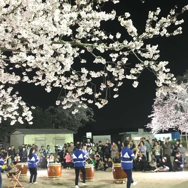真鍋の桜、夜桜