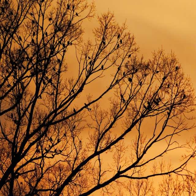 Golden Hour with Birds