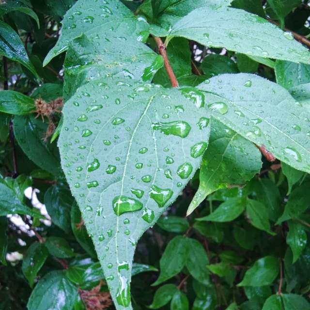 Raindrops in Germany