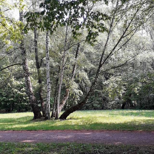 Trees...!