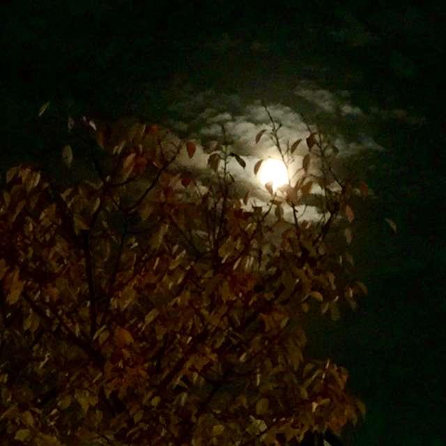 幻想的な月夜