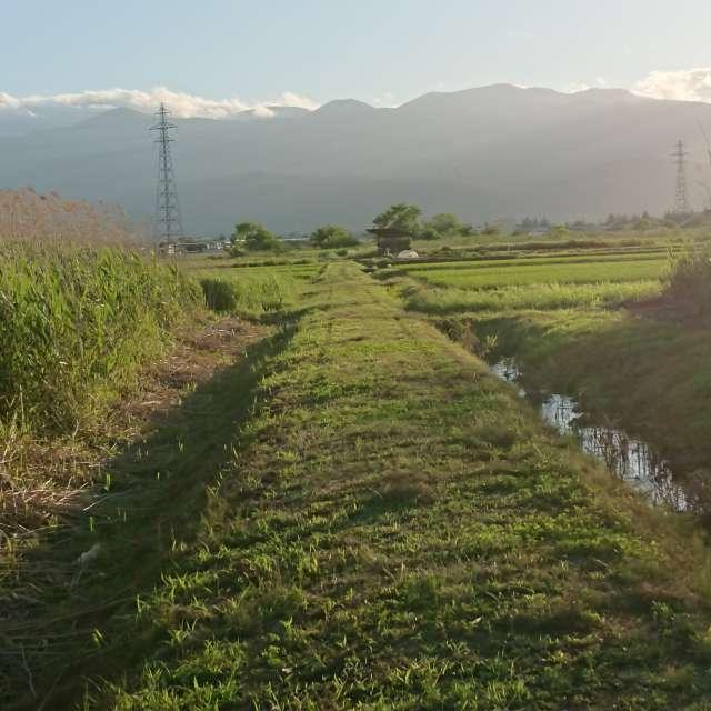 田園の畦道
