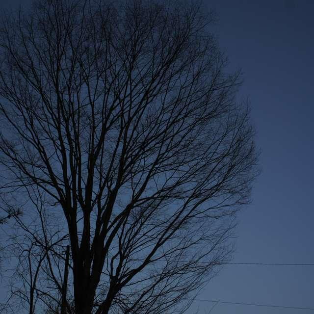 月と立ち木