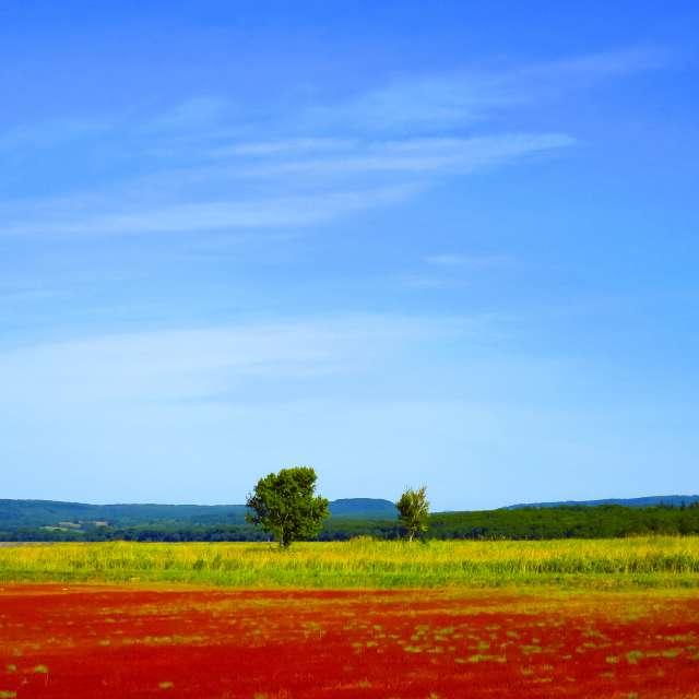コントラストが美しい、青空と紅葉したサンゴ草