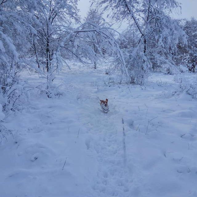 Зимний день на природе