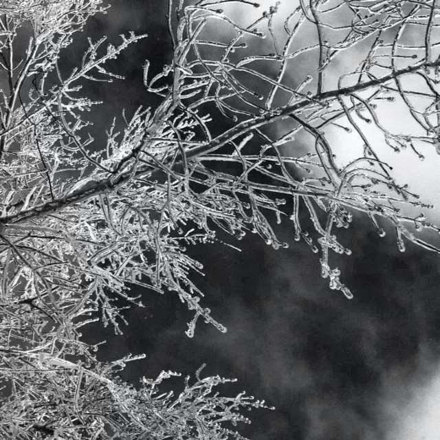 Beauty of Freezing Rain