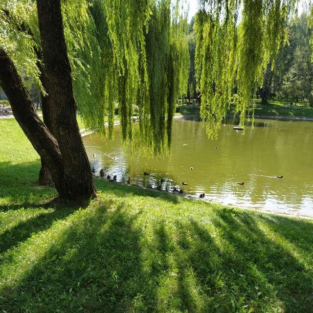 Городской парк и утки