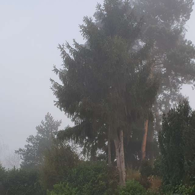 Fog in Germany