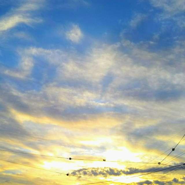 朝日と小鳥