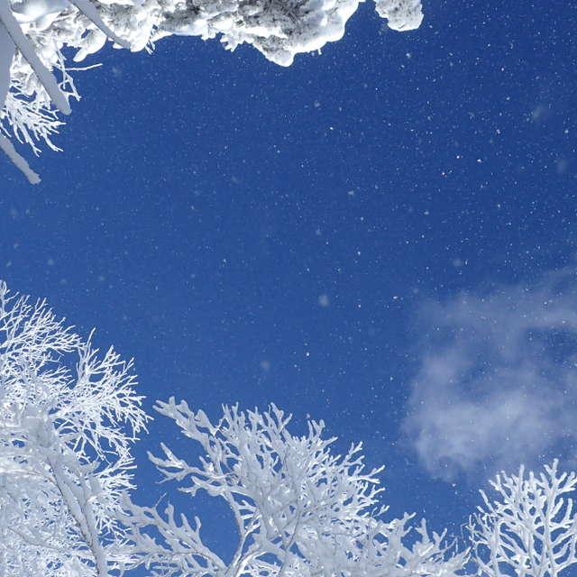 樹氷とキラキラ