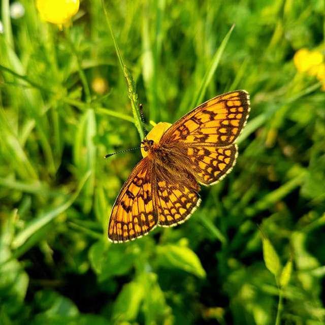 Farfalle insistenti