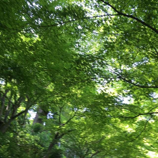 緑が心を包み込む