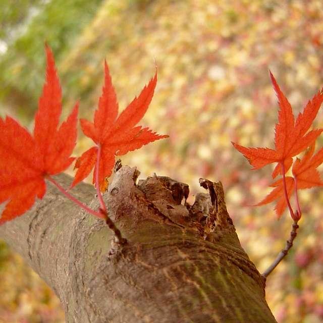 枝葉の紅葉