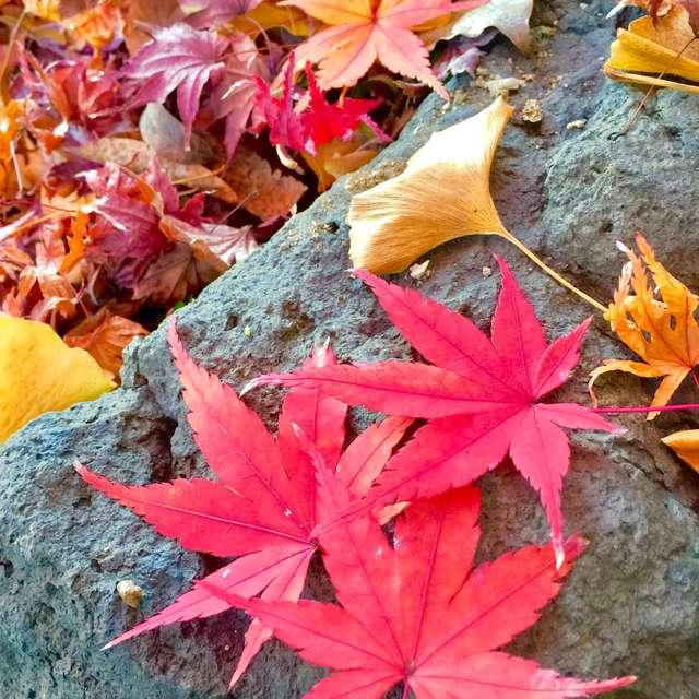 美しい散り紅葉