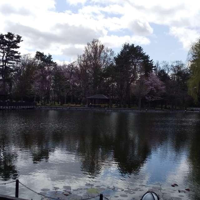 曇り空の池