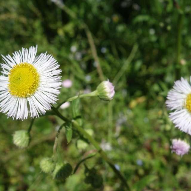 小花の夏探し
