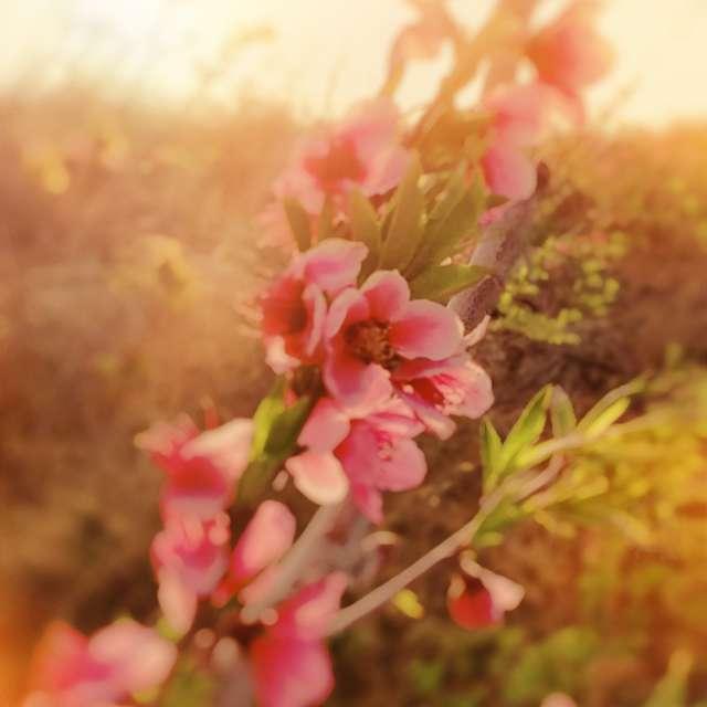一枝桃花,向人独笑