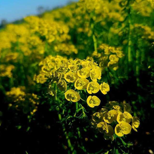 Infinitamente giallo