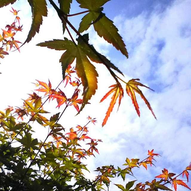 若葉の赤 初夏の緑