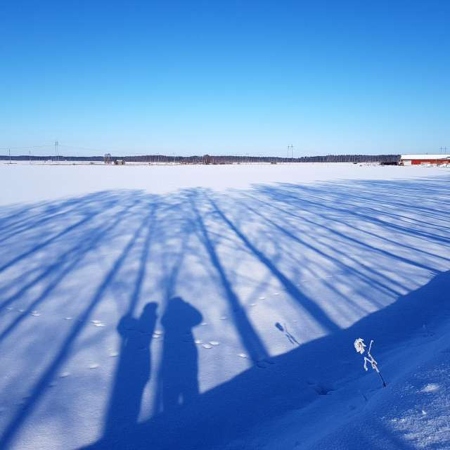 Snowy sunny day