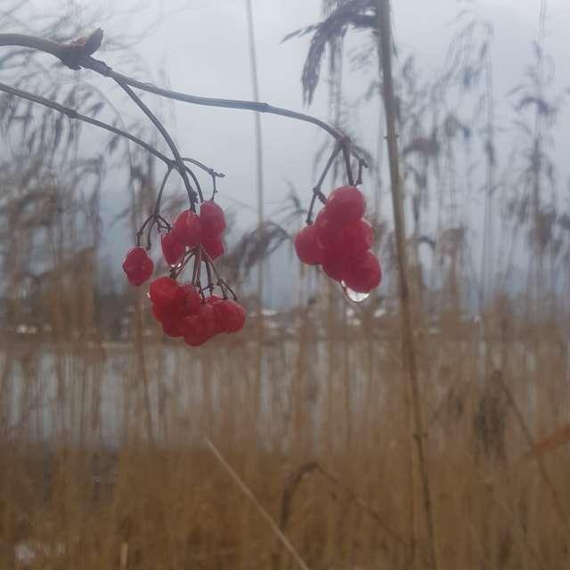 Leichter Regen am Tegernsee