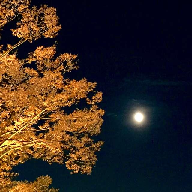 東京の月夜